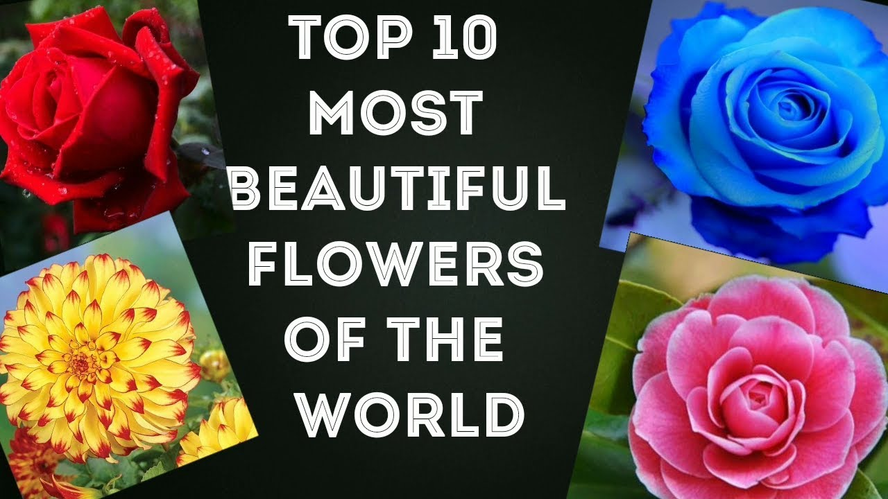 Top 10 most beautiful flowers of the world flowers youtube top 10 most beautiful flowers of the world flowers izmirmasajfo