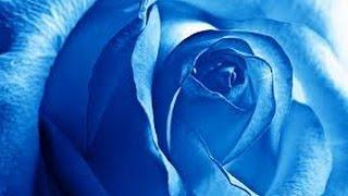 Primavera Azul - Letra.