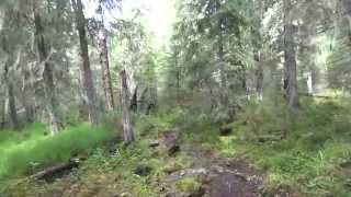 По тайге к перевалу Дятлова.