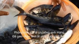 Phóng sanh thả cá trên dòng sông Giá