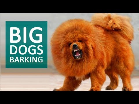 Category: Dog Sounds - Orange Free Sounds