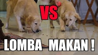 SNOWEE VS SNOWA LOMBA MAKAN | SNOWEE THE GOLDEN