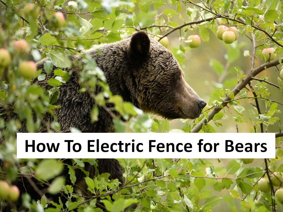 How To Electric Fence For Bears Youtube