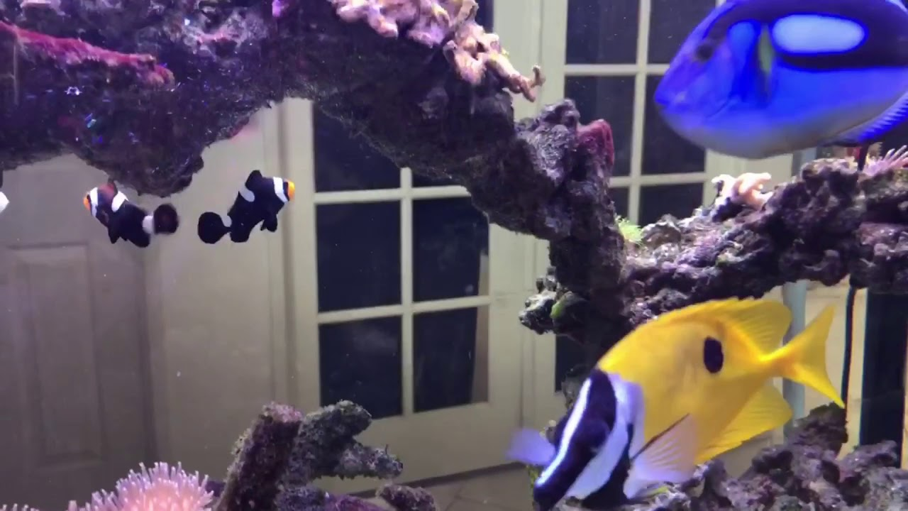 MY 75 GALLON AND 100 GALLON SALTWATER TANKS UPDATE