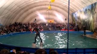 Дельфин-шоу в Волгограде, часть 4.mp4