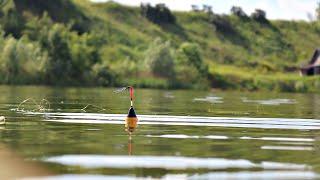 Как ловить карася летом новичку с берега на поплавочную удочку и наловить много Карась летом