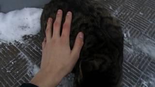 глажу кошку у киоска роспечать