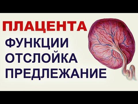 Может ли болеть плацента