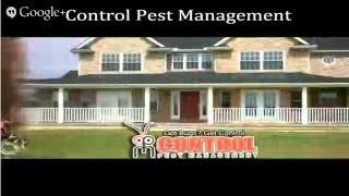 termite inspection Orlando  Toll-Free 1888961PEST  Orlando termite inspection