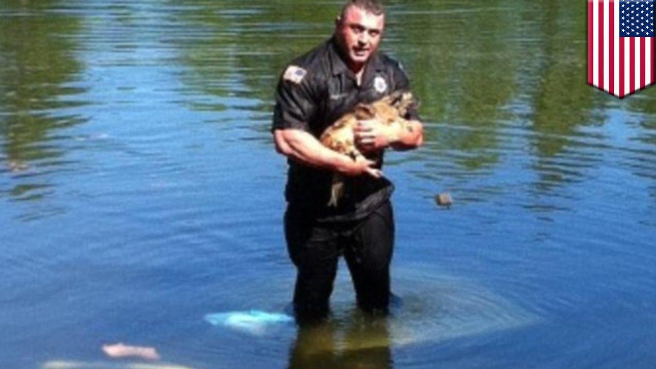 carver massachusetts policeman david harriman saved