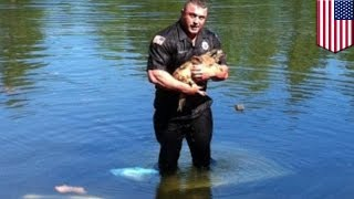 Carver Massachusetts policeman David Harriman saved Moochie the Chihuahua from drowning