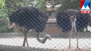 Female Ostrich died in TVM Zoo | Manorama News