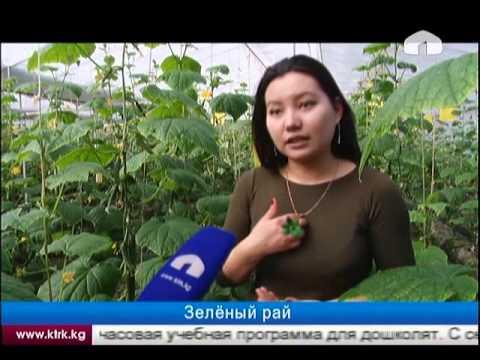 Чернигов новости смотреть