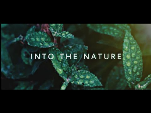 Into The Nature - Cinematic Travel Video | Canon 80d
