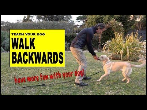Teach Your Dog to Walk Backwards - Robert Cabral Dog Training