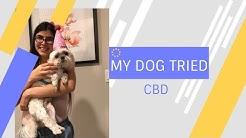 MY DOG TRIED CBD! - CBD Pet  Oil Review