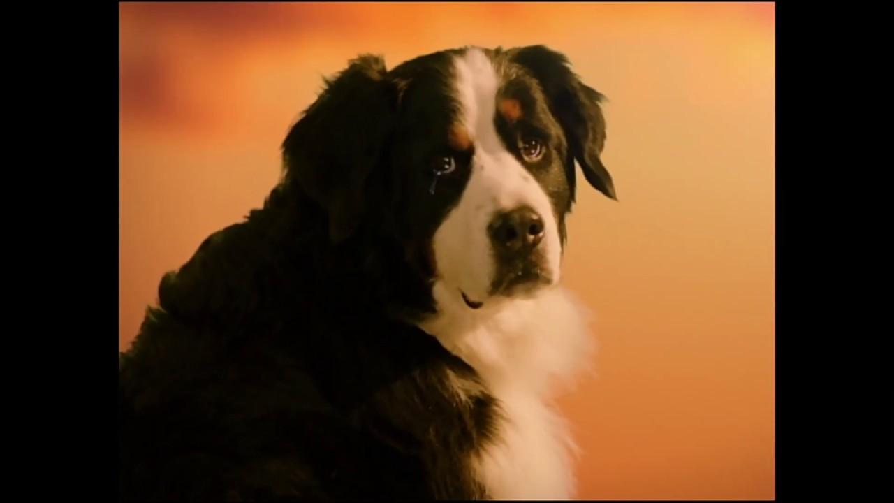 プラス フロント 犬 ライン