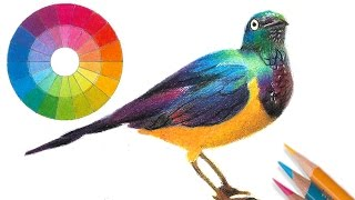 Drawing a bird with 3 colors -- Color Theory for artists.