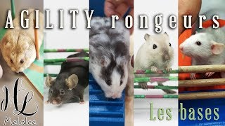 agility rongeurs (hamsters, souris, gerbilles, rats)
