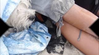 Mój Przyjaciel West Highland White Terrier- Jumper