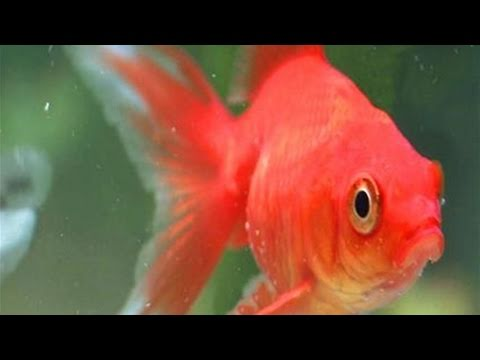how to put new fish into a fish tank youtube