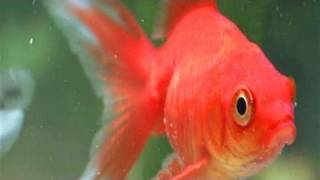 How To Put New Fish Into A Fish Tank