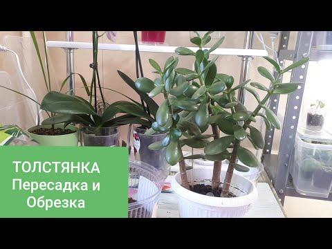 Вопрос: Как определить старое ли растение или молодое?