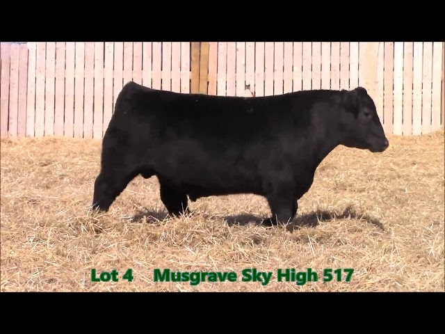 Musgrave Angus Lot 4