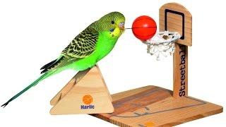 Как сделать площадку для волнистого попугая своими руками фото 497