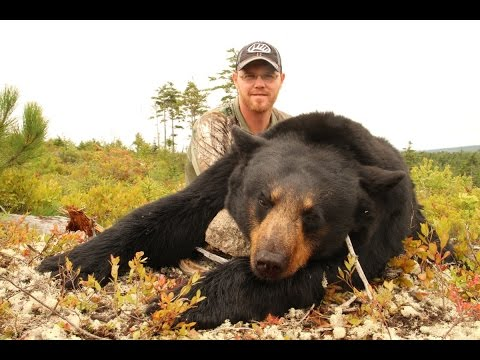 Nova Scotia Bear Hunting - 2014