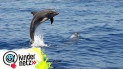 Chat mit Delfinen - Teil 01 | OLI's Wilde Welt | SWR Kindernetz