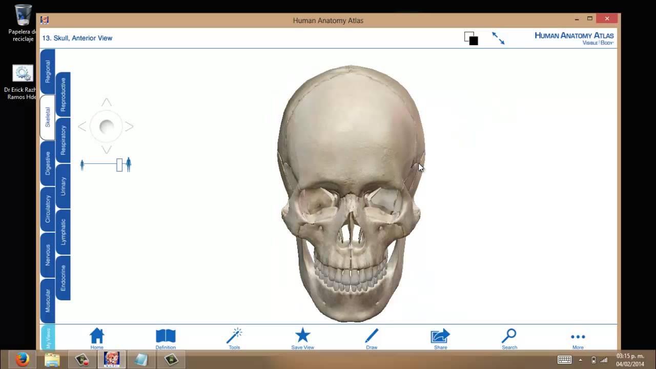Huesos del Craneo 3D - Aprende de manera Didactica¡¡ part. 1 - YouTube