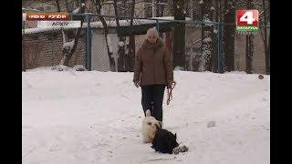 Новости Гродно. Чипование собак. 30.01.2018