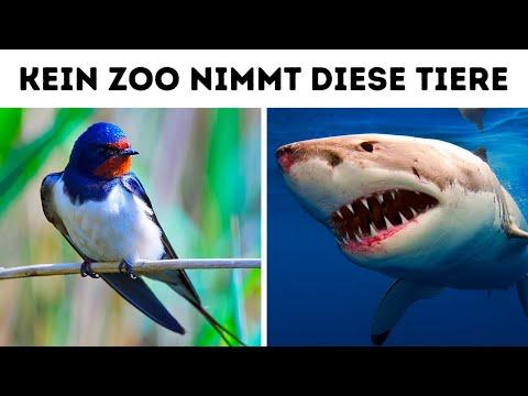 Warum du dieses Tier niemals im Zoo sehen wirst