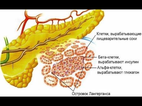 Какие бывают заболевания кожи у людей: список кожных