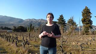 Découverte de la Drôme Provençale : le domaine viticole du Chardon Bleu