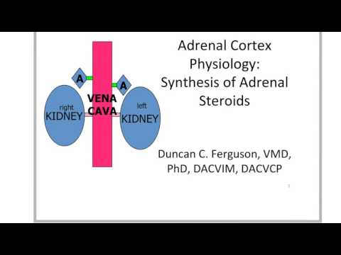 Adrenal Cortex: Synthesis