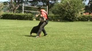 Primeiro Ztp Do Rottweiler No Brasil