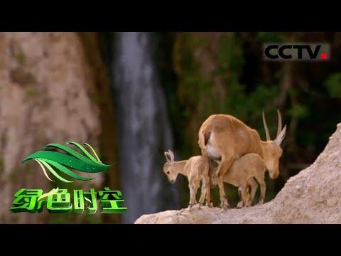 《绿色时空》 20180527 梵净山 待发现的净土CCTV农业