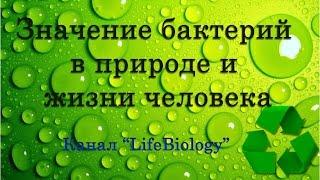 Значение бактерий в природе и жизни человека