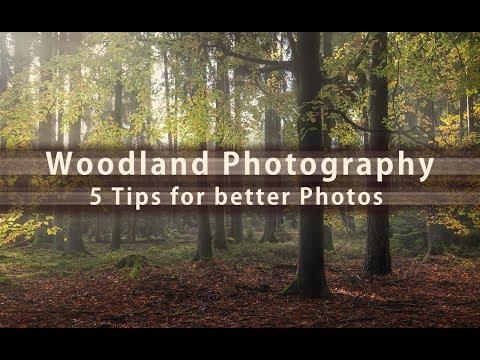 Better Woodland Photos - 5 Tips