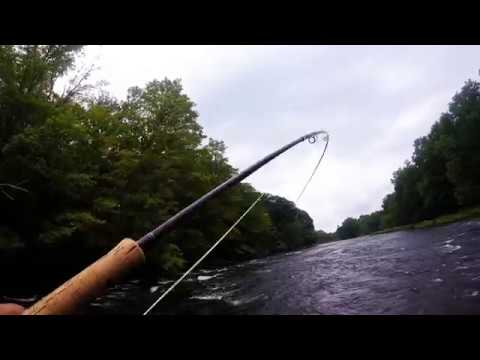 Beautiful Fresh Coho Salmon Fly Fishing on the DSR - Salmon River NY