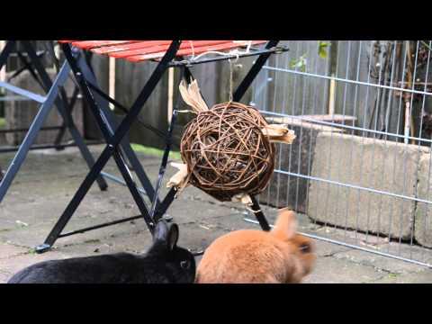 Konijnen Orry en Naranja onderzoeken nieuw speelgoed