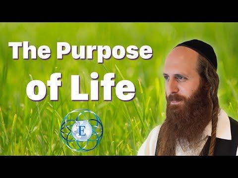 The Purpose of Life   Rav Dror