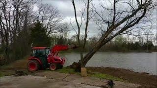 Kioti NX6010 Pushing over a HUGE live locust tree