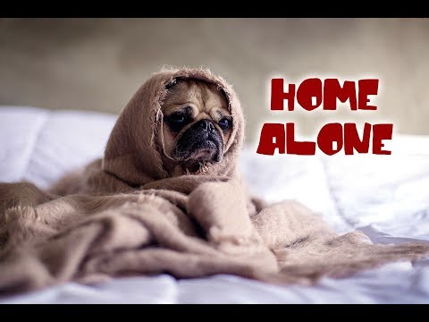 Top 10 Dog Breeds that can Stay Home Alone
