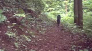 山で遊ぶ甲斐犬.