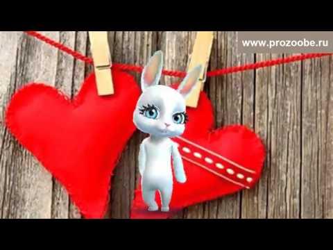 Поздравление с Днем Святого Валентина ❀❀❀ Что пожелать тебе не знаю ❀❀❀ Поздравления от Зайки - Видео с ютуба