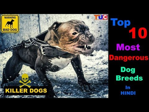 Top 10 Most Dangerous Dog Breeds in HINDI : TUC : The Ultimate Channel
