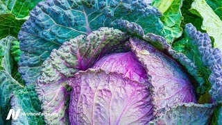 Benefits of Cabbage Leaves on the Knee for Osteoarthritis